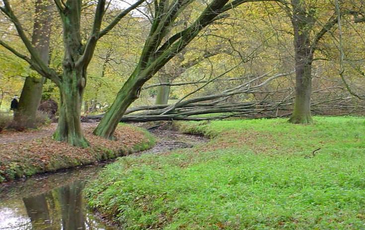 herbstbaum_liegend_ha.jpg (150958 Byte)
